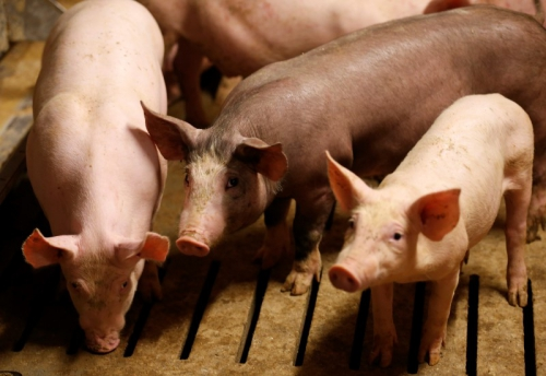 ofrtp-france-agriculteurs-le-foll.jpg